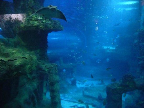 Hotel Gran Bahia Bernardo : Künstliches Becken mit Millionen Liter Wasser