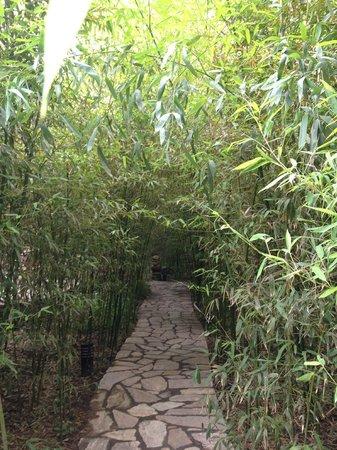 Bamboo Garden Hotel: Bamboo garden