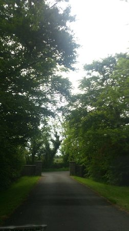 Ballinclea House Bed and Breakfast: Drive way to house