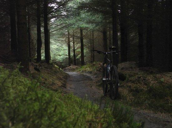 Trem Gwydir Holiday Village: On the Marin trail 5 minute ride away. 25km amazing!