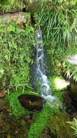 Tenshaen Garden: 養老の滝