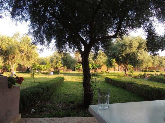 Hotel Riad Berbere : Terrasse / jardin