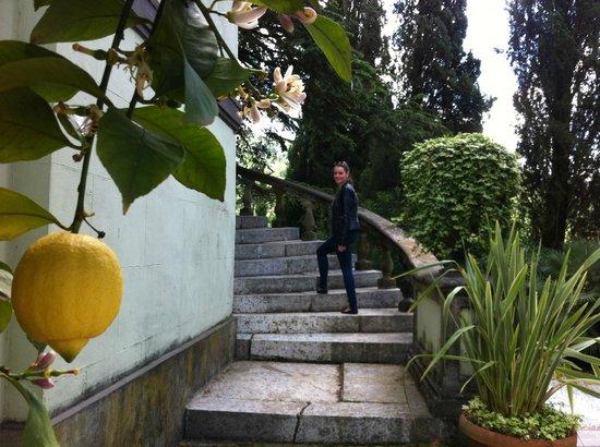 Villa Alta: Stairs to the Villa