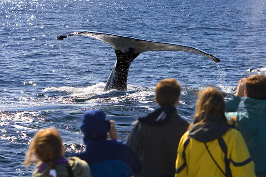 Best of Alaska Whale Watching Adventure