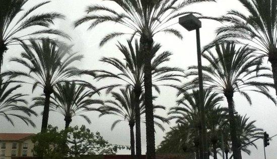 Hilton Garden Inn Anaheim/Garden Grove : Palm tree walkway in front of hotel