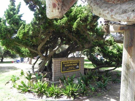 Ellen Browning Scripps Park: the sign