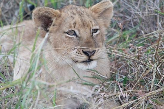 Tangala Safari Camp: 6 month old cub, taken by Elzabe Bogenhofer