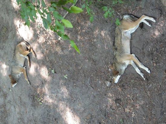 Newport News, VA: Endangered Red Wolves