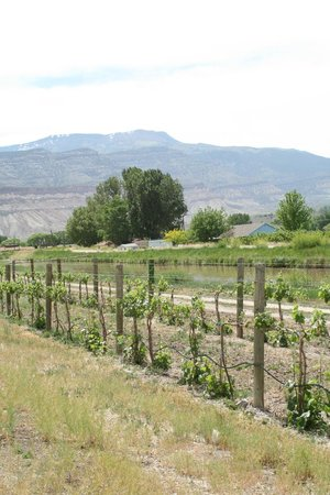 واين كنتري إن باليساد: Mesa and Vineyards