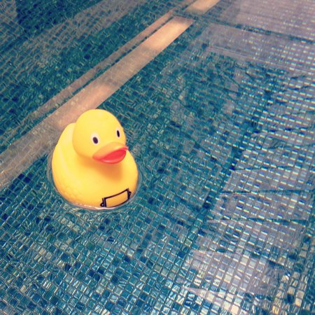 Town Hall Hotel: Rubber ducky in pool