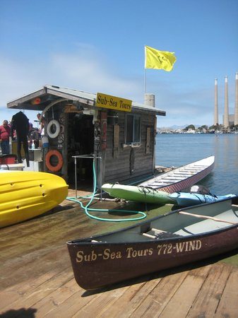 Sub Sea Tours and Kayaks : Sunny day in Morro Bay!