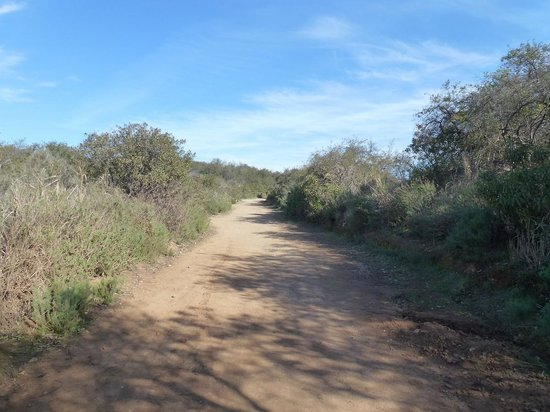 Fire Road Trail in Santa Monica Mountains