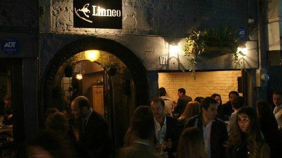 Linneo. Pub Botanico: An art event at Linneo