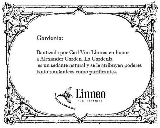 Linneo. Pub Botanico: Some herbs's benefits