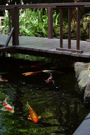 Honor Mansion, A Wine Country Resort : Our koi will eat right from your hand!