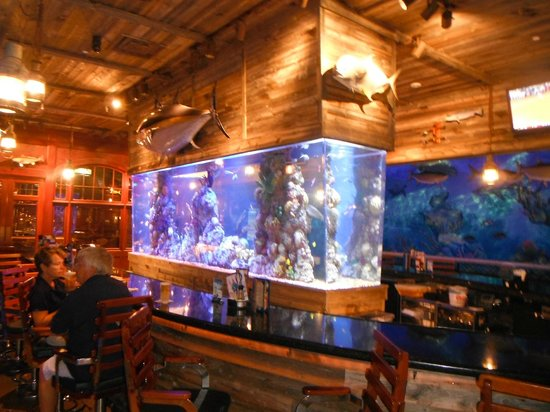 uncle bucks fishbowl and grill beautiful tropical fish tank
