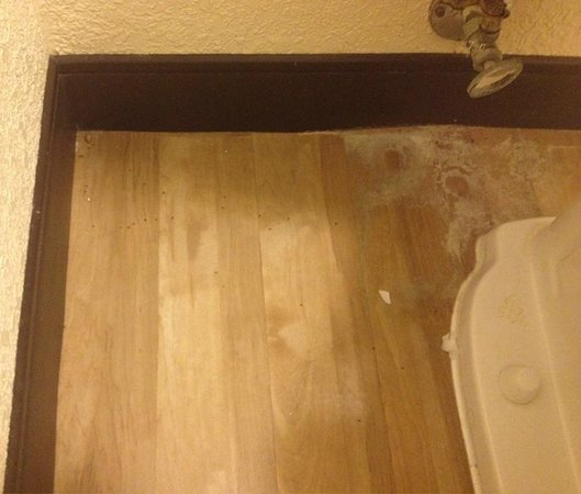 Red Roof Inn Binghamton - Johnson City: Stains, bits of trash and dead bugs on the floor