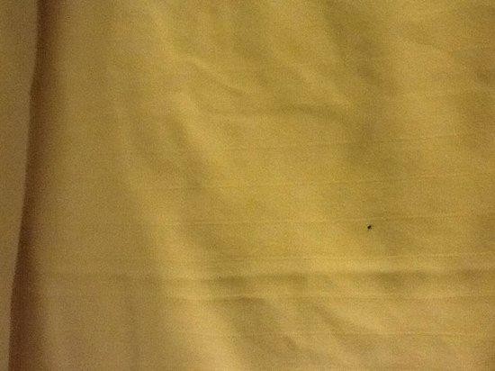 Quality Inn: Bed bugs