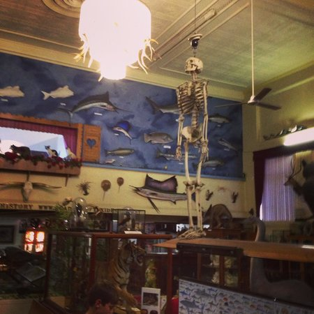 Academy of Taxidermy