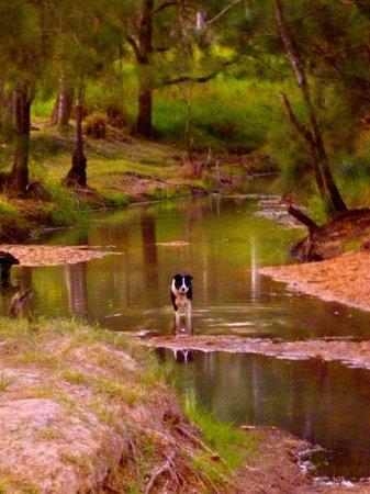 Innot Hot Springs, Austrália: Nettle Creek