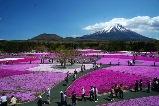 Fujikawaguchiko-machi, Japan: 本栖湖 芝桜展望台から