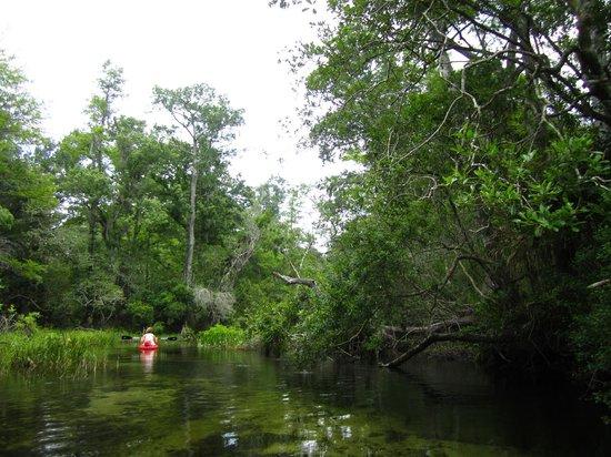 Juniper Springs Recreation Area: Canoe Run