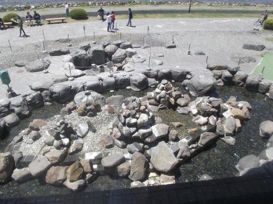 Lake Suwa Geyser Center: 七つの温泉の湧出口