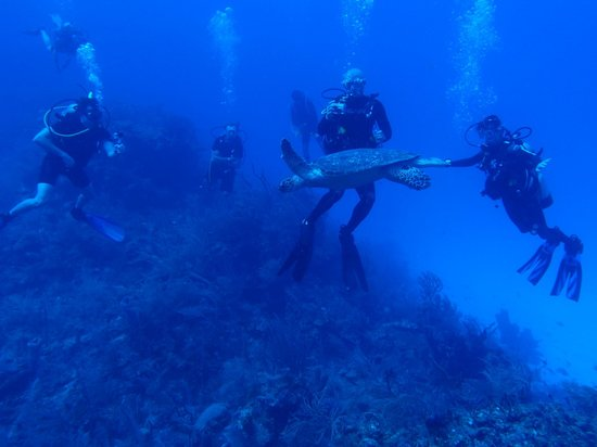 Hamanasi Adventure and Dive Resort: Great Barrier Reef Diving