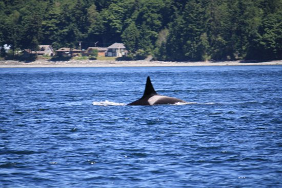 Aboriginal Journeys Wildlife and Adventure Tours: Male ORCA