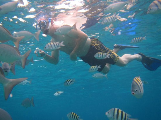 Cozumel, Mexico: Snorkeling with the fish