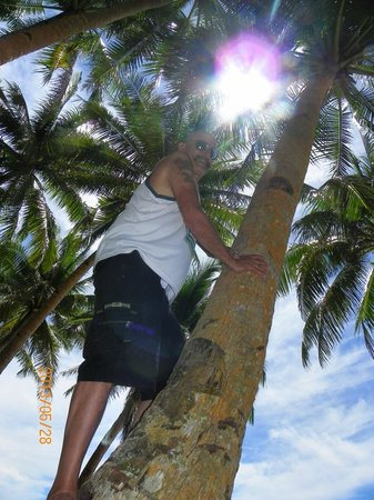 Siargao Inn: I loved climbing the palms for the coconuts.