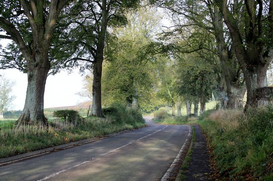 The Lime Tree Avenue entering Dulcote