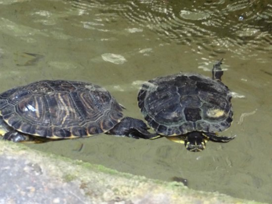 B&B Biancagiulia: Turtles in the fountain