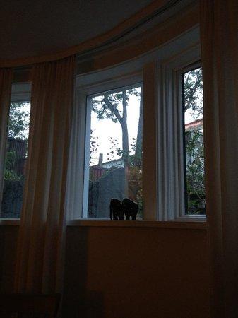 Kalli's Apartments: Utsikt mot trädgården från lägenheten i källarplan, midnattssol.