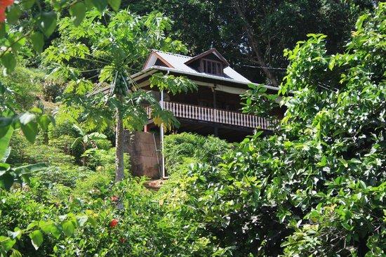 Calou Guest House Hotel : Der Garten mit Blick auf ein Hotelgebäude