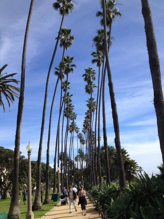 Palisades Park : As palmeiras gigantes do Palisades