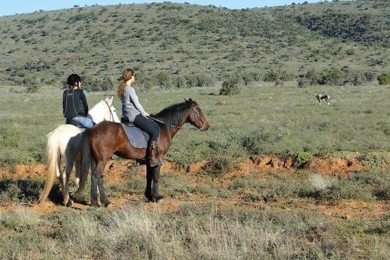 Ufumene Game Lodge: horsebackriding