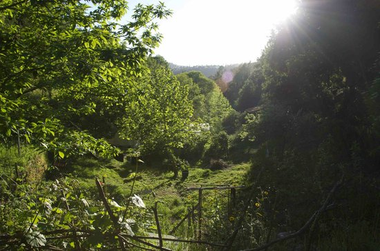 Yurt Holiday Portugal: The View down the valley from the sunbeds....