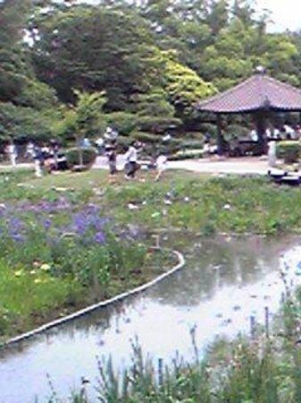 Shirokita Park : 菖蒲園内
