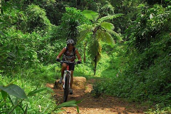 CocosTravel - Day Tours: Regenwaldtrail
