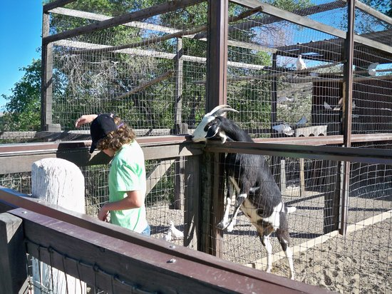 Casa Grande Trading Post & Petting Zoo: Feeding the goat