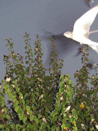Nissia Kamares Hotel Apartments: bird