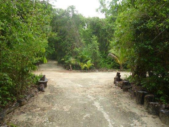 Jolie Jungle : Environnement