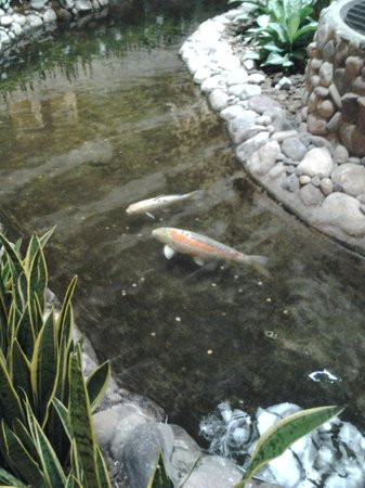 Embassy Suites by Hilton San Diego - La Jolla: Koi fish pond.