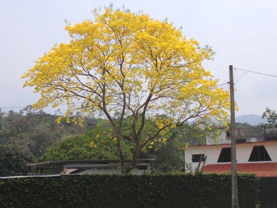 Hotel Nututun Palenque: lluvia de oro