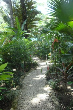 El Pequeno Gecko Verde : path way to our cabana