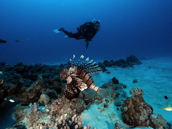 Just Diving: Poison Reef Mauritius