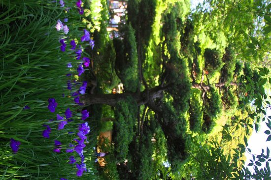 Part of the beauty of the gardens of Chiba Park