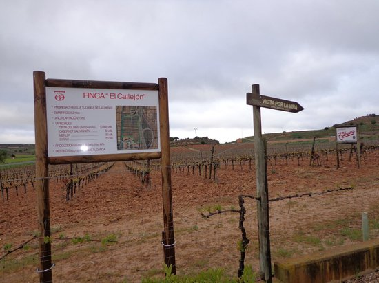 Hotel Tudanca-Aranda II: Rutas viñedos