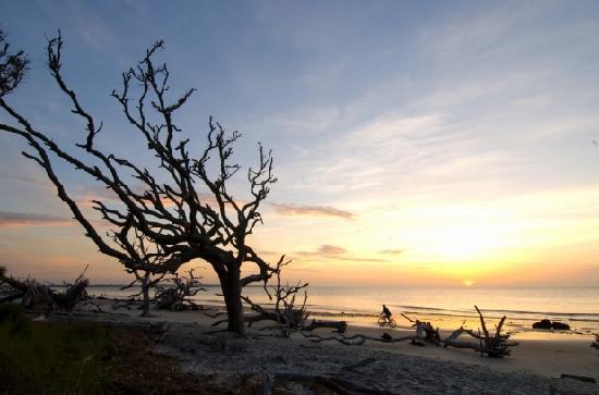 Islas Doradas de Georgia, GA: Driftwood Beach on Jekyll Island